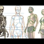 Chapter 1 – Intro to Structure & Function of the Body